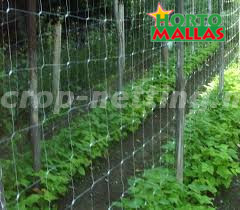 trellis net used on garden in vertical support system