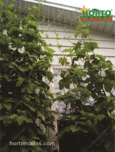 espalier mesh installed in a house
