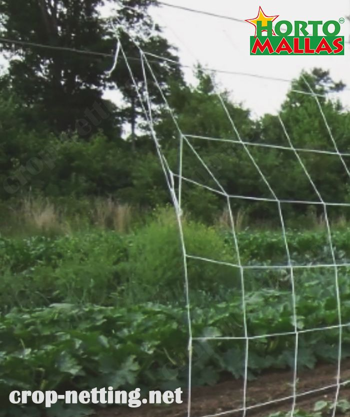espalier trellis net get good results for the crops