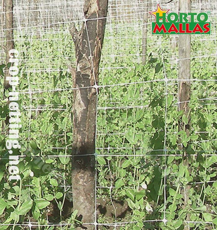 hortomallas espalier trellis net protect your crops against pathogens