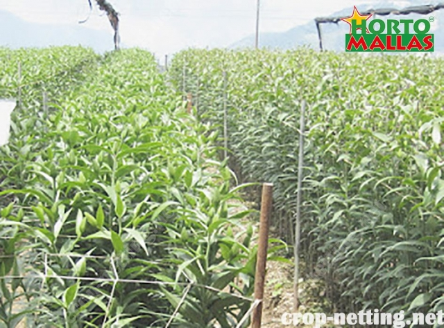 hortomallas crop netting reduce the attack of pest and pathogens