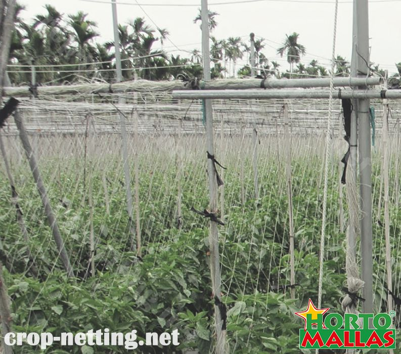 crop netting protect your crops against pathogens
