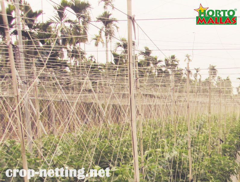 crops netting for a good tutoring with hortomallas
