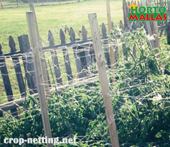 triple tutoring mesh for tomato crops against pathogens and pest