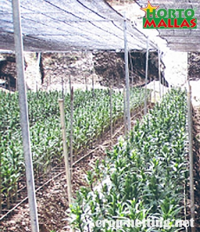 crop netting for tutoring and help to a good growth