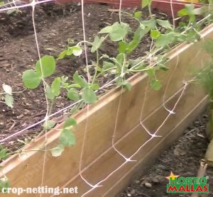 vertical trellis system used for provide support in the plant growth
