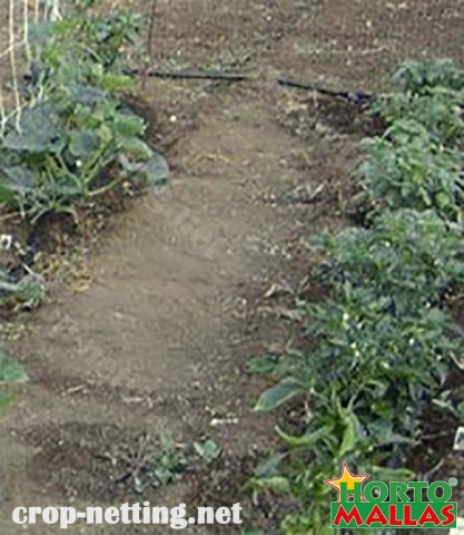 hortomallas trellis netting protect cucumber crop and tutoring them