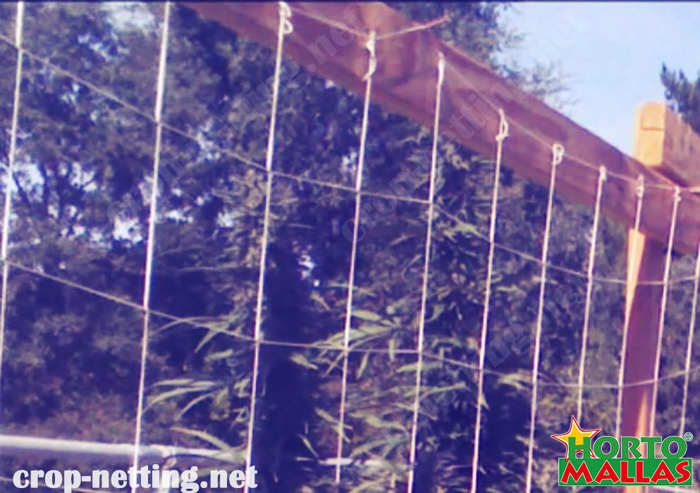 Hortomallas espalier maximize the exposition to the sun  y protect against pathogens