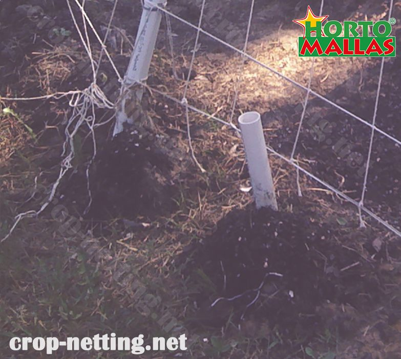 crop netting on garden protect your crops against pathogens and pest