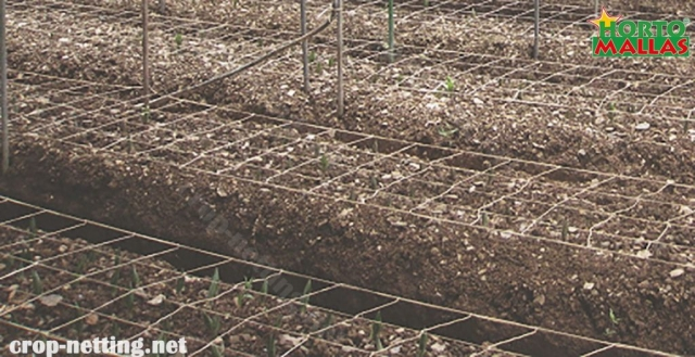 hortomallas crop netting for protection of crops of seeds.